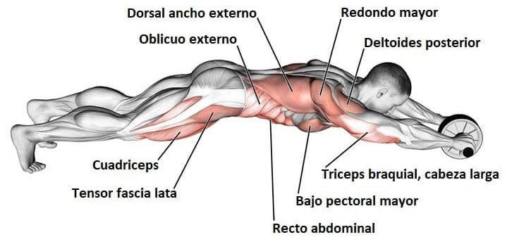 rueda abdominal musculos que trabaja